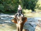 Nate the Mahout